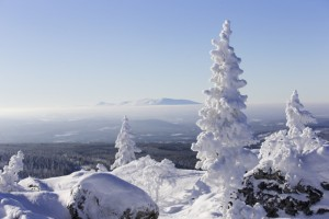Tjockt med snö på granarna i Vemdalen.